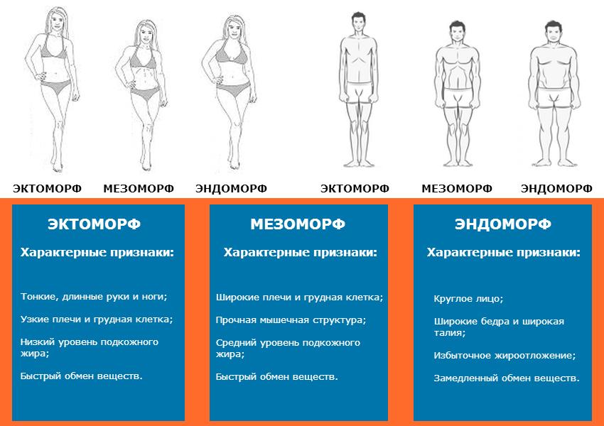 Эктоморф Питание Для Похудения. Как похудеть эндоморфу: питание для «пухлого» типа