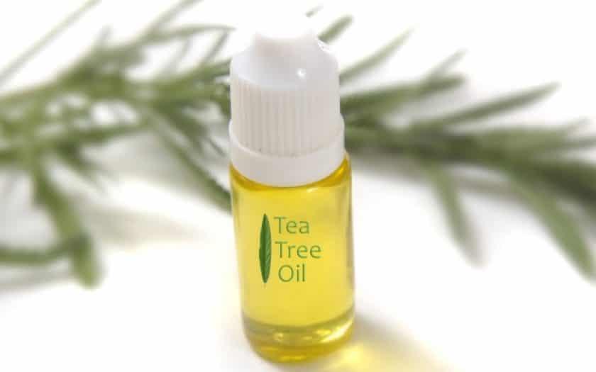 Чайное дерево эфирное масло: применение от прыщей, как использовать