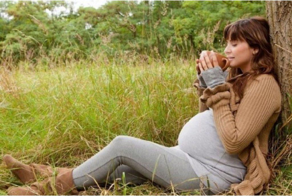 Эффективные успокоительные травы для нервной системы взрослого